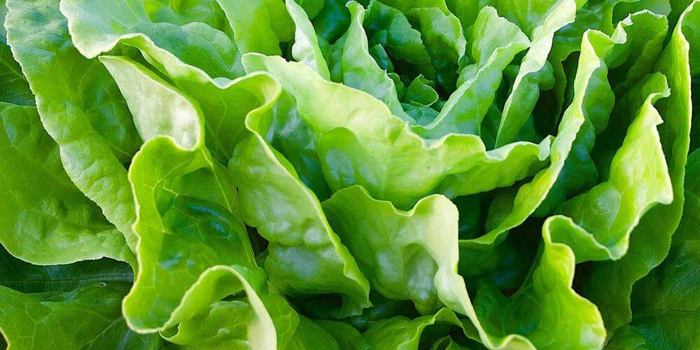 sla groenten kweken kweektips zaaien